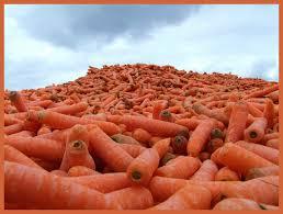 carrot-mountain